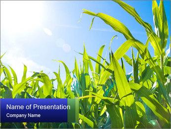 Green corn PowerPoint Template - Slide 1