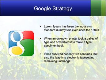Green corn PowerPoint Template - Slide 10
