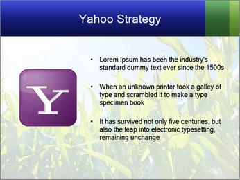 Green corn PowerPoint Template - Slide 11
