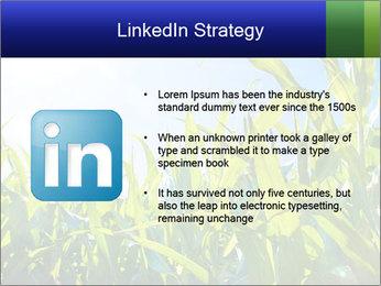 Green corn PowerPoint Template - Slide 12