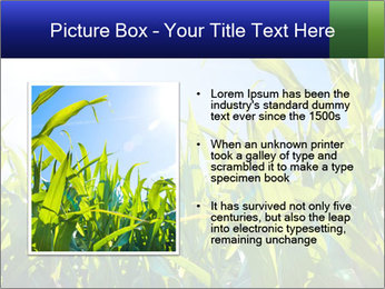 Green corn PowerPoint Template - Slide 13