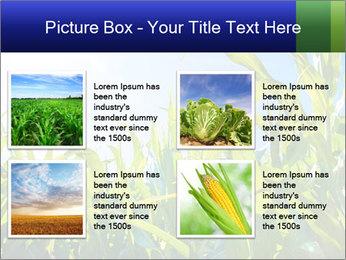 Green corn PowerPoint Template - Slide 14