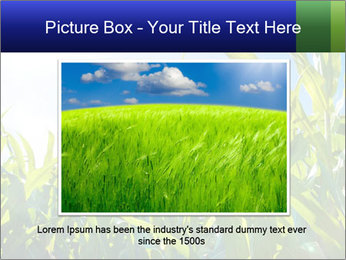 Green corn PowerPoint Template - Slide 15