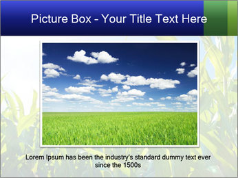 Green corn PowerPoint Template - Slide 16