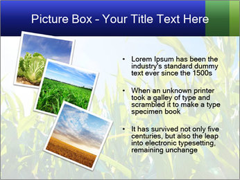 Green corn PowerPoint Template - Slide 17