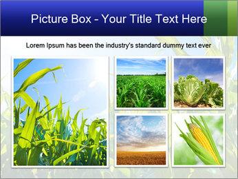 Green corn PowerPoint Template - Slide 19