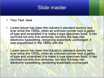 Green corn PowerPoint Template - Slide 2
