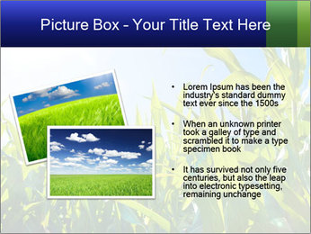 Green corn PowerPoint Template - Slide 20