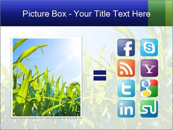 Green corn PowerPoint Template - Slide 21