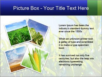 Green corn PowerPoint Template - Slide 23