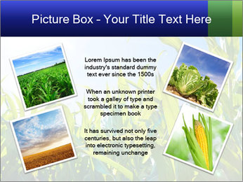 Green corn PowerPoint Template - Slide 24