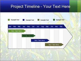 Green corn PowerPoint Template - Slide 25