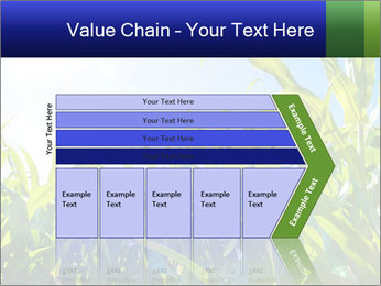 Green corn PowerPoint Template - Slide 27