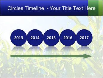 Green corn PowerPoint Template - Slide 29