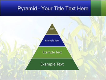 Green corn PowerPoint Template - Slide 30