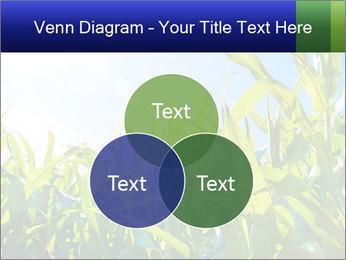 Green corn PowerPoint Template - Slide 33