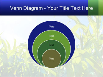 Green corn PowerPoint Template - Slide 34