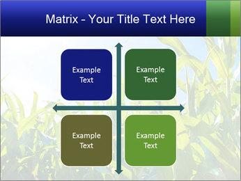 Green corn PowerPoint Template - Slide 37
