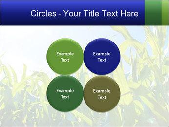 Green corn PowerPoint Template - Slide 38
