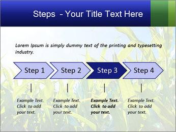 Green corn PowerPoint Template - Slide 4