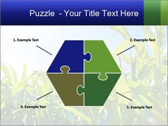 Green corn PowerPoint Template - Slide 40