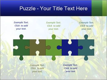 Green corn PowerPoint Template - Slide 41