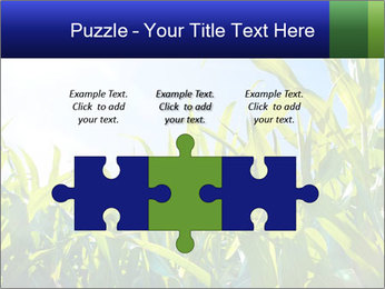 Green corn PowerPoint Template - Slide 42