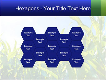 Green corn PowerPoint Template - Slide 44