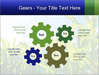 Green corn PowerPoint Template - Slide 47