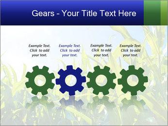 Green corn PowerPoint Template - Slide 48