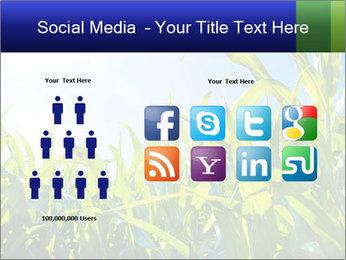 Green corn PowerPoint Template - Slide 5