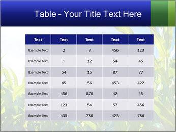 Green corn PowerPoint Template - Slide 55