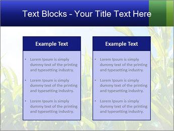 Green corn PowerPoint Template - Slide 57