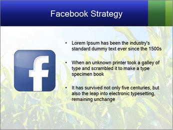 Green corn PowerPoint Template - Slide 6
