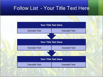 Green corn PowerPoint Template - Slide 60