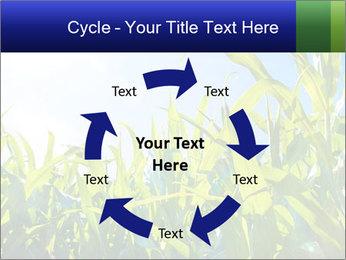 Green corn PowerPoint Template - Slide 62