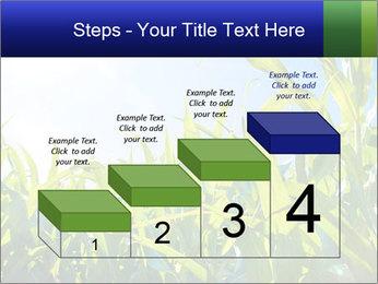 Green corn PowerPoint Template - Slide 64