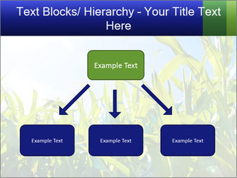 Green corn PowerPoint Template - Slide 69