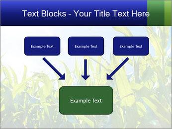 Green corn PowerPoint Template - Slide 70