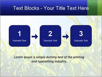 Green corn PowerPoint Template - Slide 71