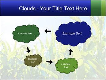 Green corn PowerPoint Template - Slide 72