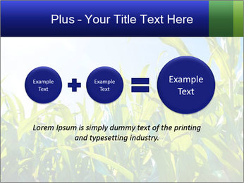 Green corn PowerPoint Template - Slide 75