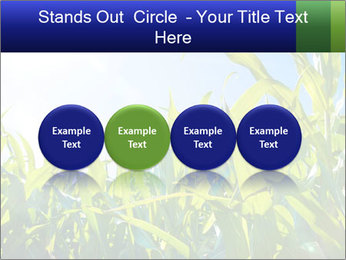 Green corn PowerPoint Template - Slide 76