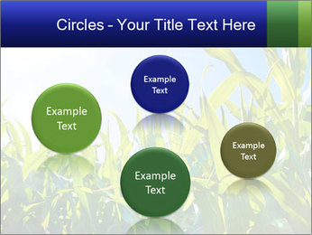 Green corn PowerPoint Template - Slide 77