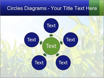Green corn PowerPoint Template - Slide 78