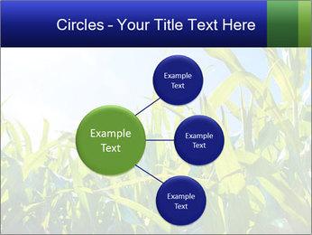 Green corn PowerPoint Template - Slide 79