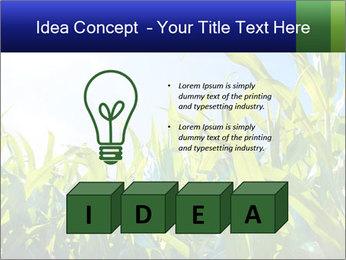 Green corn PowerPoint Template - Slide 80