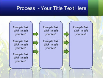 Green corn PowerPoint Template - Slide 86