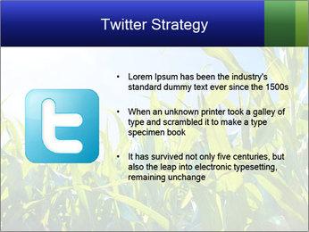 Green corn PowerPoint Template - Slide 9