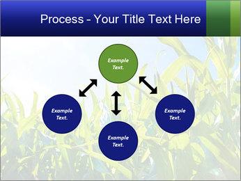 Green corn PowerPoint Template - Slide 91